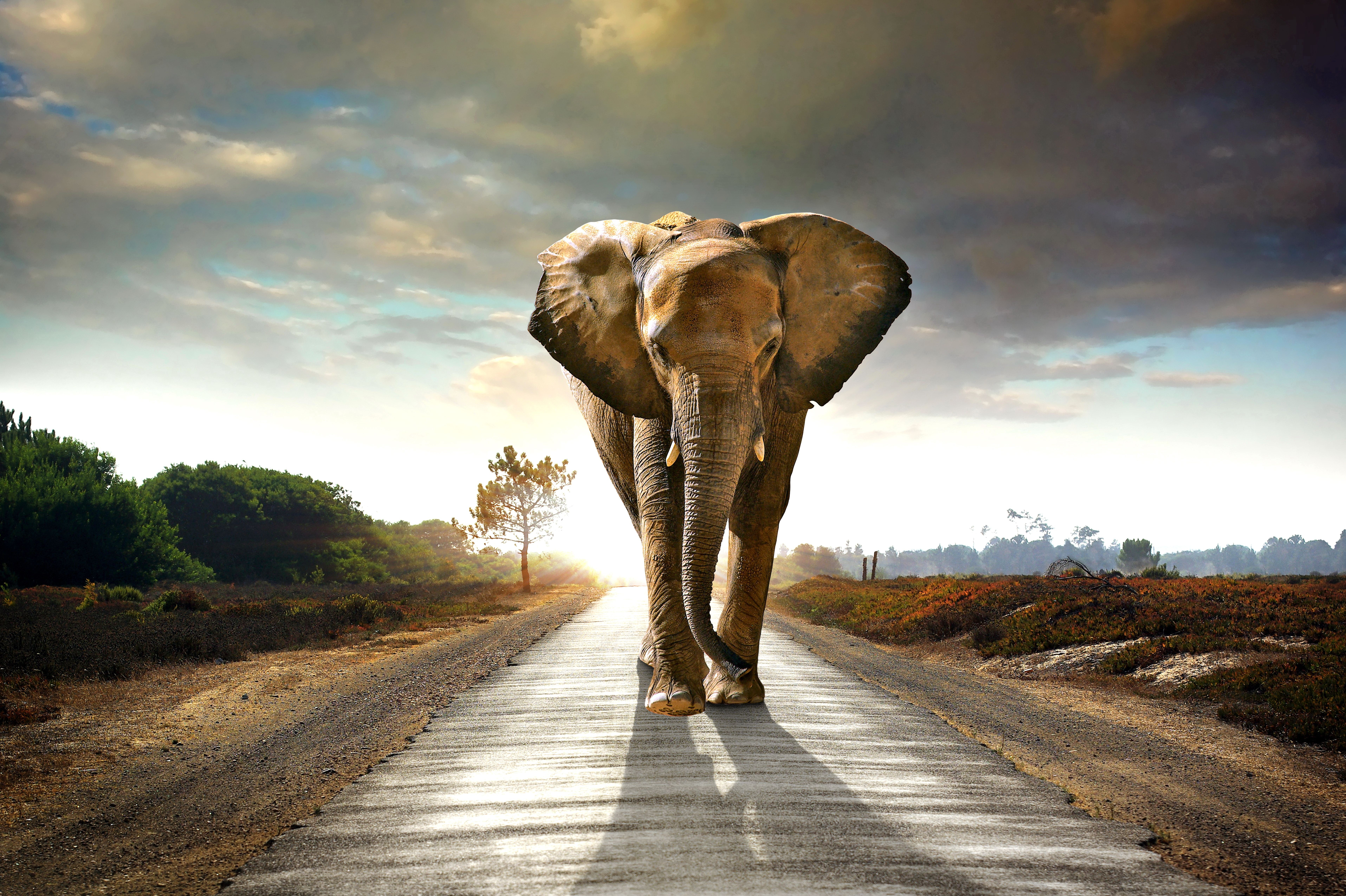 Elephant On A Road 3d Wallpaper For Walls Sv 170